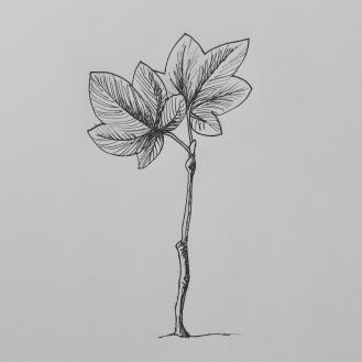 Day 14: Tree
